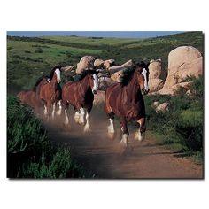 Pretty Horses, Horse Love, Beautiful Horses, Animals Beautiful, Clysdale Horses, Draft Horses, Black Horses, Framing Photography, Art Photography