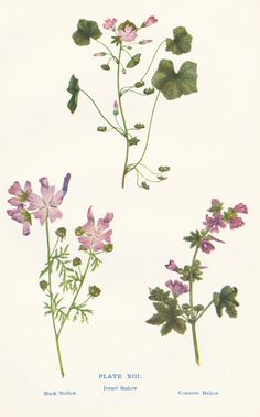 Mallow Pink Flowers Antique Botanical by PeonyandThistlePaper, £6.00
