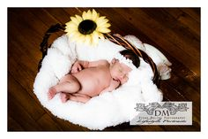 Sunflower and basket newborn photography props