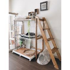 we love cats. Cat Hotel, Cat Cages, Cat Shelves, Cat Playground, Animal Room, Cat Enclosure, Cat Room, Aggressive Dog, Pet Furniture