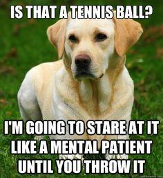 Mental Patient Memes | ... at it like a mental patient until you throw it - Dog Logic - quickmeme