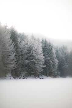 Dusting of snow on the trees