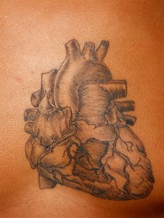 Anatomical Heart Tattoo Inspired by Medical Illustrator Sketch