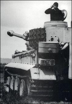Tiger-g.jpg