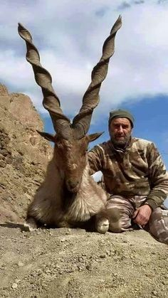Markhor Pakistan National Animal