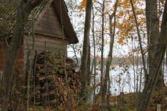 myfoto, plant, fatherland, homeland, autumn2014