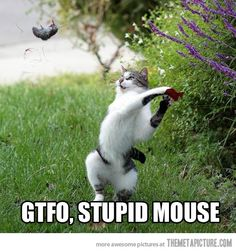 Go away, mouse!