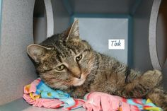 Hi my name is Tink and I am a pretty young tabby girl who was found as a stray in Hanover. I am 2-3 years old and  pretty tabby! I am very friendly, a little bit layed back and I will certainly be your new best friend. I hope you can visit me soon!...
