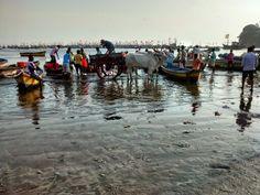 bullock carts taking away haul from boats