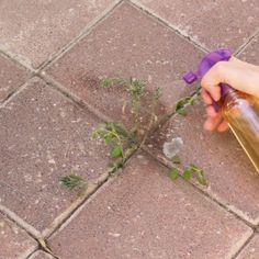Raise your hand if you hate weeds! I totally can't stand them, and they're always creeping up into my yard, between my pavers, everywhere! Most people I know use that awful poison. With this all natural, non- toxic weed killer, your weeds will be gone! diy | weed kiler | diy weed killers | home hacks |