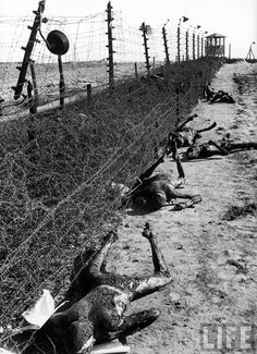 Charred corpses lie along the electrified fence at Erla Camp No. 3, a subcamp of Buchenwald. These corpses are probably those of would-be escapees, though the lethal charge in the fence was an easy and relatively painless option for suicides. One out of four people passing through the entrance of Buchenwald never left.
