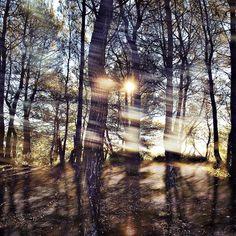La matière s'habille de vent et de lumière - Entre chaque murmure se glisse nos bonheurs - Tendrement, accueillons l'hiver - #colorsmemories #photosensible #lightmemories
