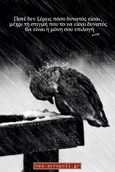 Black and White Photography - Resilience - extreme rain - quotes Black White Photos, Black And White Photography, I Love Rain, Singing In The Rain, Ansel Adams, Rainy Days, Belle Photo, Beautiful Birds, Pet Birds