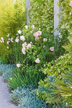 designer Dominique Lafourcade, Provence, France: Pierre de Ronsard roses and bamboos along the driveway with concrete pillars and Trachelospermum jasminoides Pierre Ronsard also known as Eden rose. It belongs to a class of roses known as Romanticas.