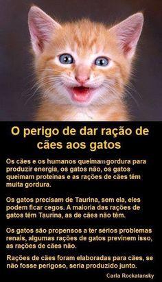 o perigo das rações de cães para os gatos.