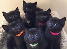 favd_cutencats-July 27 2017 at 11:27PM
