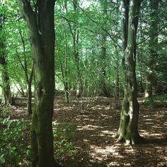 Woodland walk... #scotland #scotspirit #fife #lovefifeautumn #woods #shadow #sunlight #nature #landscape #outdoors #adventure #wanderlust