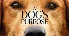 Free A Dog's Purpose 2017 [Torrent Movie] Download with Link file link in Full HD. Torrent Link update in July 2017. A Dog's Purpose 2017 [Torrent Movie] Download with Link from Torrent Movies Hat.