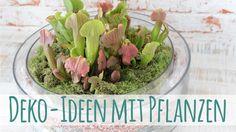 Deko-Ideen mit Pflanzen ★ Deko Inspirationen Selbstgemacht