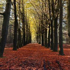 Autumn Forest Walkway Printed Backdrop - 6791