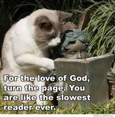 """"""". . .You are like the slowest reader ever."""" Meme of cat and garden statue """"sharing"""" a book."""