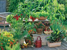 Gekonnt kombiniert: Sonnenkinder wie Paprika und Peperoni brauchen mehr Wärme als Tomaten und gedeihen auf der Pflanzentreppe prächtig. Knollenfenchel und Olivenkraut geben sich auch mit Halbschatten zufrieden. Hoch wachsender Zuckermais sorgt für Sicht- und Windschutz