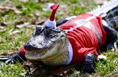 Merry Christmas Christmas Animals, Garden Sculpture, Merry Christmas, Outdoor Decor, Merry Little Christmas, Wish You Merry Christmas