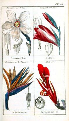 Botanical - Botanique de la Jeunesse - (9)