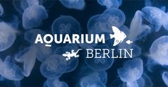 Unser Aquarium ist das einzige Binnenlandaquarium der Welt, das zahlreiche Quallenarten in künstlichem Seewasser züchtet. Seien Sie dabei!