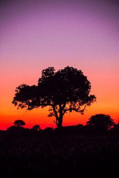 African Sunset - Okavango Delta, Botswana