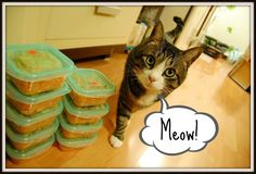 Homemade Cat Food Recipes ; Special needs recipes for your feline ; Special diet for cats with kidney stones, urinary infections http://bulldogvitamins.blogspot.com/2011/04/cat-food-questions-recipes-for-cat-food.html