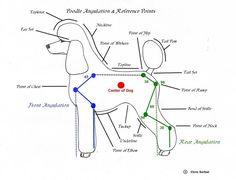 Dog grooming on Pinterest | Anatomy