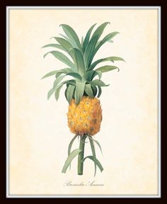 Botanical Print    Redoute' Antique Botanical Art Print - Pineapple 1815 Paris - 8 x10 Art Print. $10.00, via Etsy.