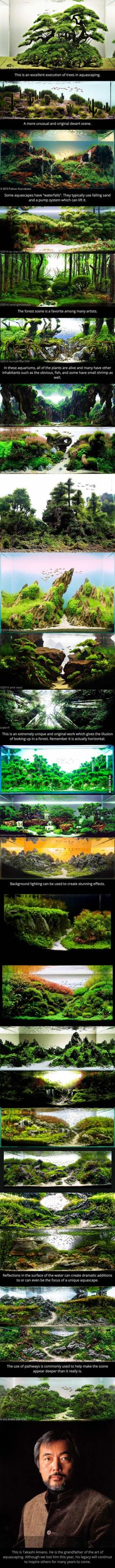 These Are Aquariums. This Is The Art Of Aquascaping.