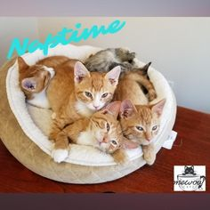 Don't know about you but would love to snuggle up with these precious babies! #catnap #meow #kitten #kitty #kitties #kittenlove #kittycats #cutecat #Catoftheday #Kittylove #Instakitty #Catstagram #Catofinstagram #catlife #instacats #catlove #catscatscats #catsandcoffee #catcafe #adoptdontshop #adoptacat #catadoption