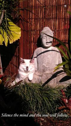 Buddha and cat. KittyCommotion.com wonders if there is anyone more at one with herself than a cat...