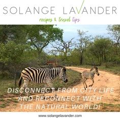 A safari in South Africa promises adventure, reconnection with the natural world and relaxation. Read the post and get travel inspiration!