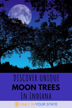 Where did moon trees come from? Seeds that were in outer space! 500 Sycamore seeds went into orbit for 9 days and were then planted. While most of these trees are now gone, you can find several in Indiana. Learn where!