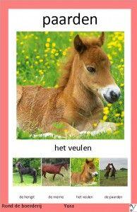 rond de boerderij kwartet Learn Dutch, Horse Exercises, Horse Games, Dressage, School, November, Animals, Pictures, November Born