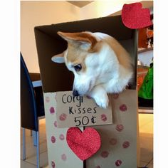 Corgi kisses booth for Valentine's Day!!!