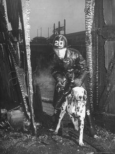 Dalmatien à l'entraînement avec un pompier de Boston.