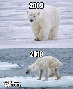 10 Year Challenge, climate change and global warming. - 10 Year Challenge, climate change and global warming. Save Planet Earth, Save Our Earth, Our Planet, Save The Planet, Salve A Terra, Photo Choc, What Is Climate, Global Warming Climate Change, Global Warming Project