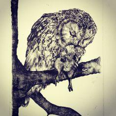 Third owl