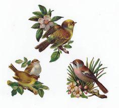 Victorian Scraps Birds Pink Cherry Blossom