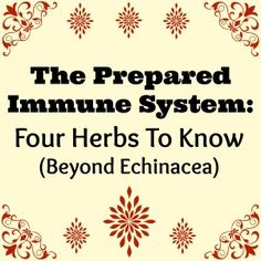 The Prepared Immune System: Four Herbs to Know (Other Than Echinacea)