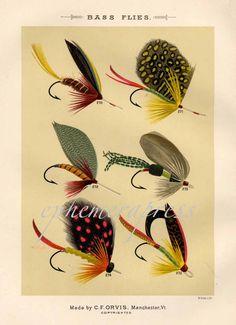 bass flies glorious fly fishing print no. 1 by EPHEMERApress, $12.50