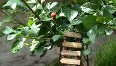 Tutorail : An Arbor For Your Fairy Garden - The Magic Onions