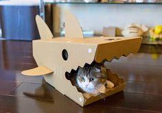 Tubarão de gatos – Bem Legaus