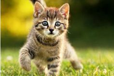#animals #kittens #cats #wallpapers #freewallpapers #freebies