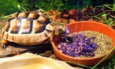 Was soll ich füttern Terrarium, Tortoise House, Happy Turtle, Tortoises, Animals And Pets, Outdoor Decor, Turtles, Imagination, Berry